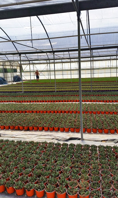 Clean greenhouses